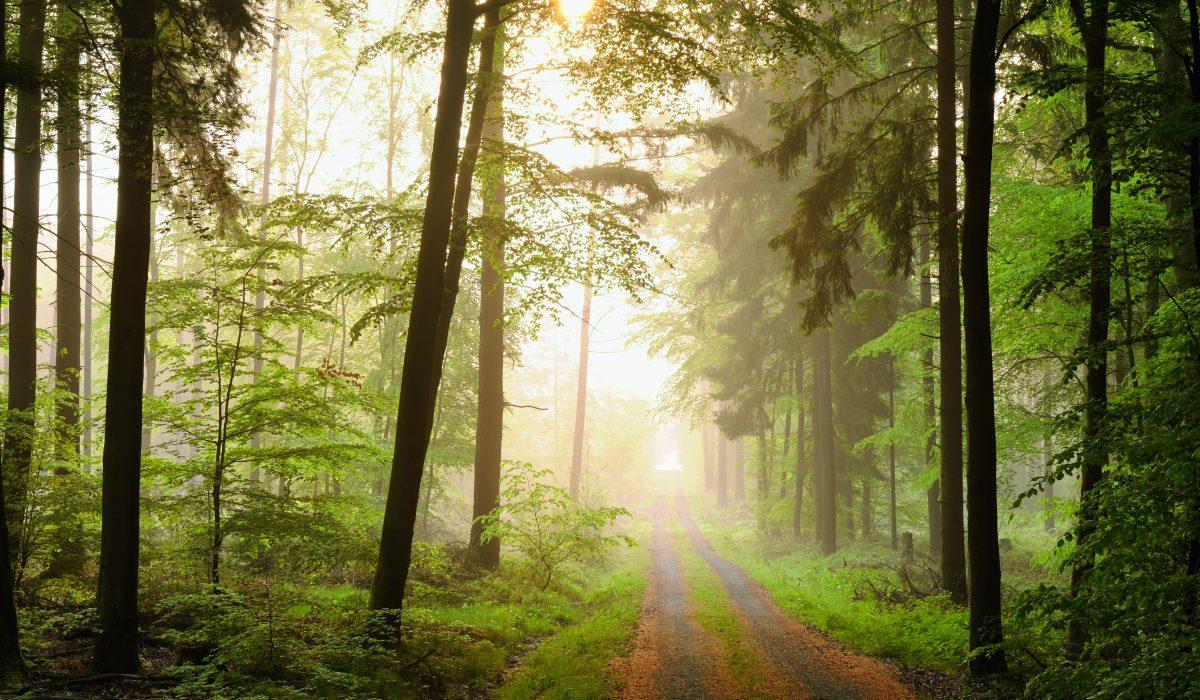 Bild eines Waldweges